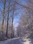 Heider Bergsee/© P. Dohmen: Der See im Winter.
